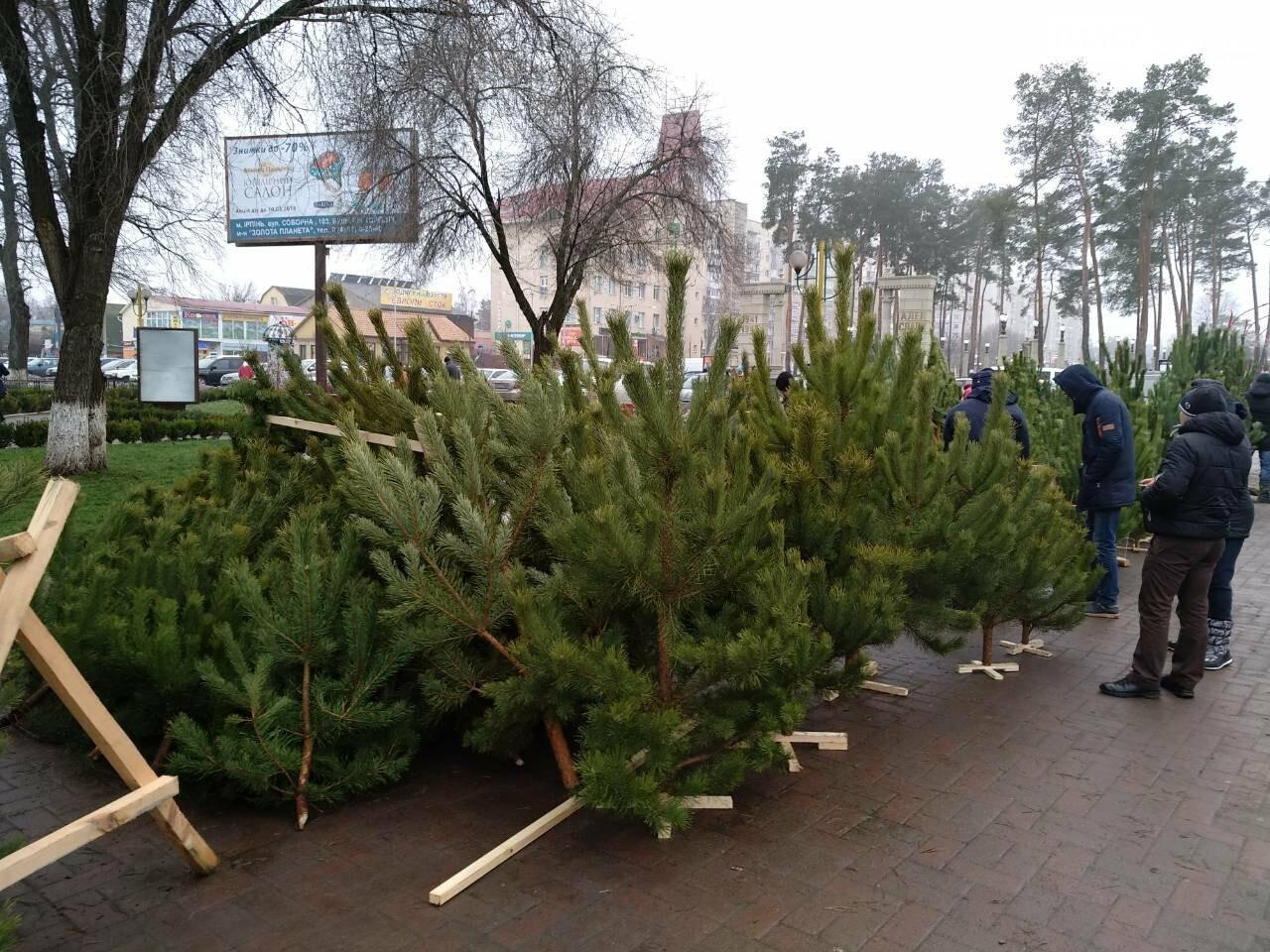 Де і за скільки купити новорічну ялинку в Приірпінні, фото-1