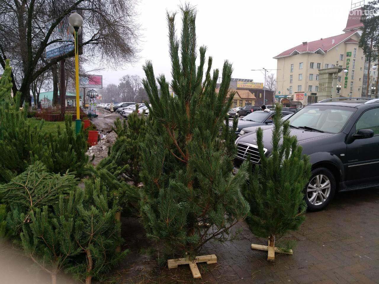 Де і за скільки купити новорічну ялинку в Приірпінні, фото-2