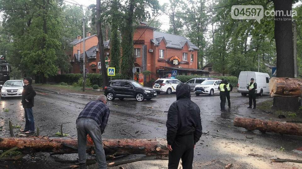 У Бучі на Газель впало дерево, є постраждалі, фото-3