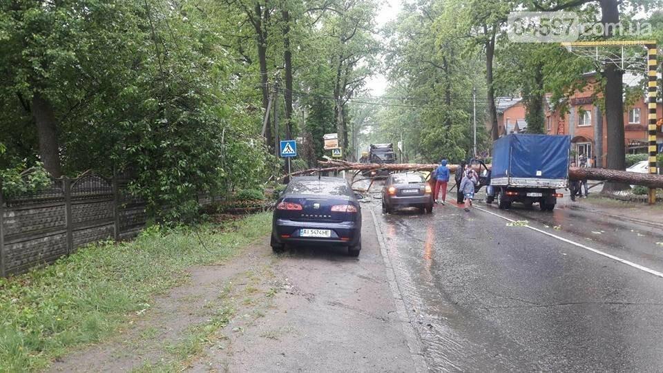 У Бучі на Газель впало дерево, є постраждалі, фото-4