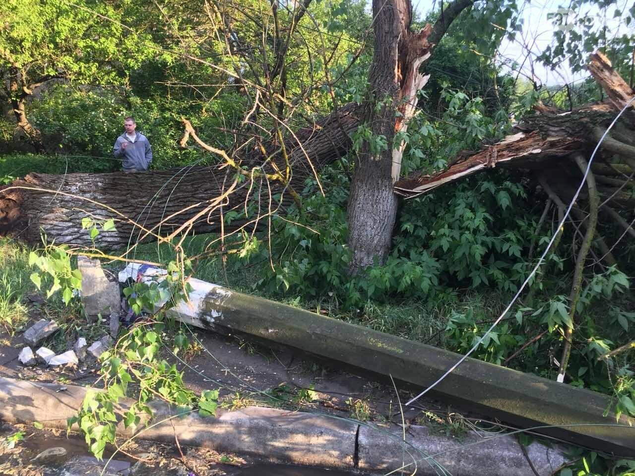 Повалені дерева, обірвані електродроти: як пройшли вихідні в регіоні, фото-2