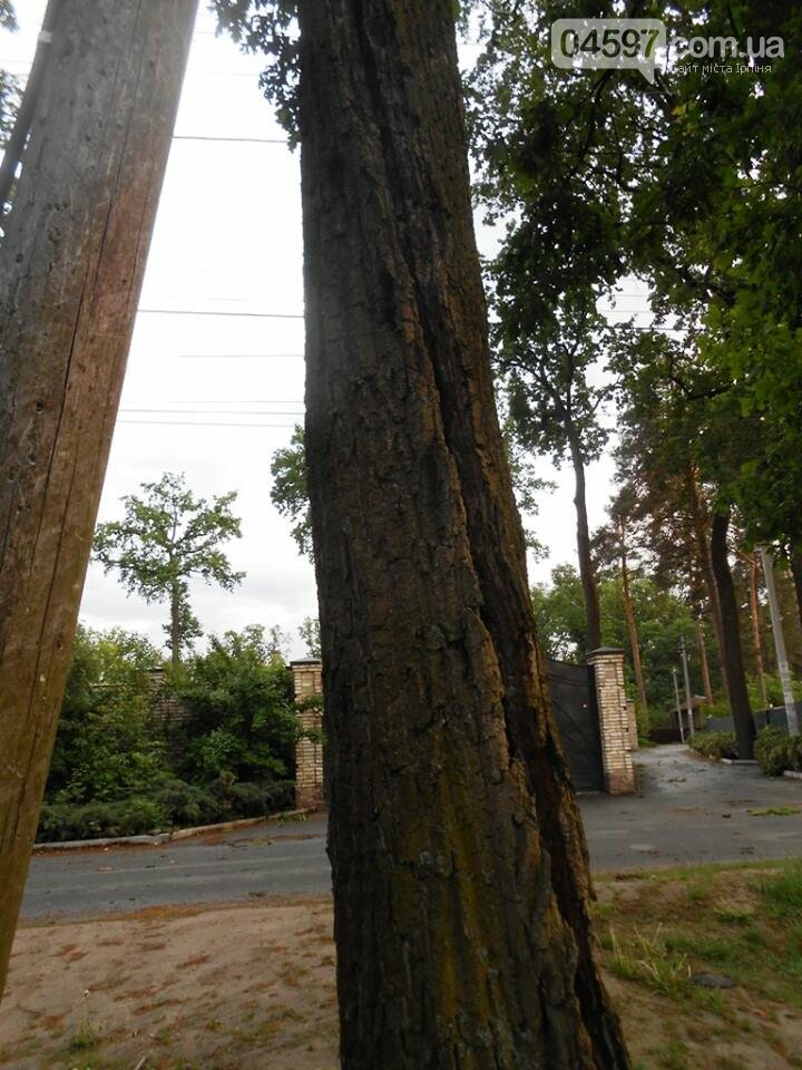 Повалені дерева, обірвані електродроти: як пройшли вихідні в регіоні, фото-3