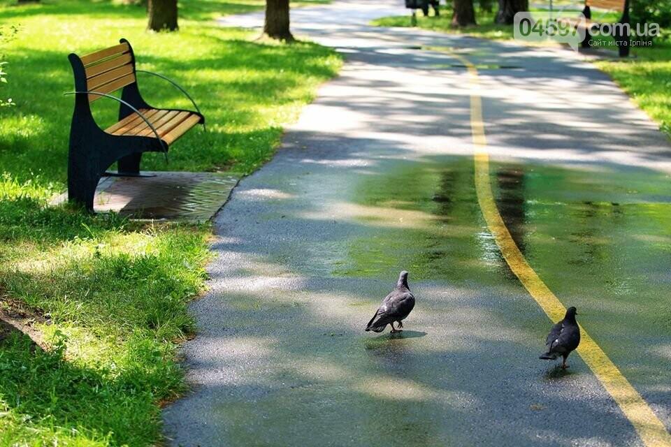 Ірпінь відзначає міжнародний день парків, фото-15