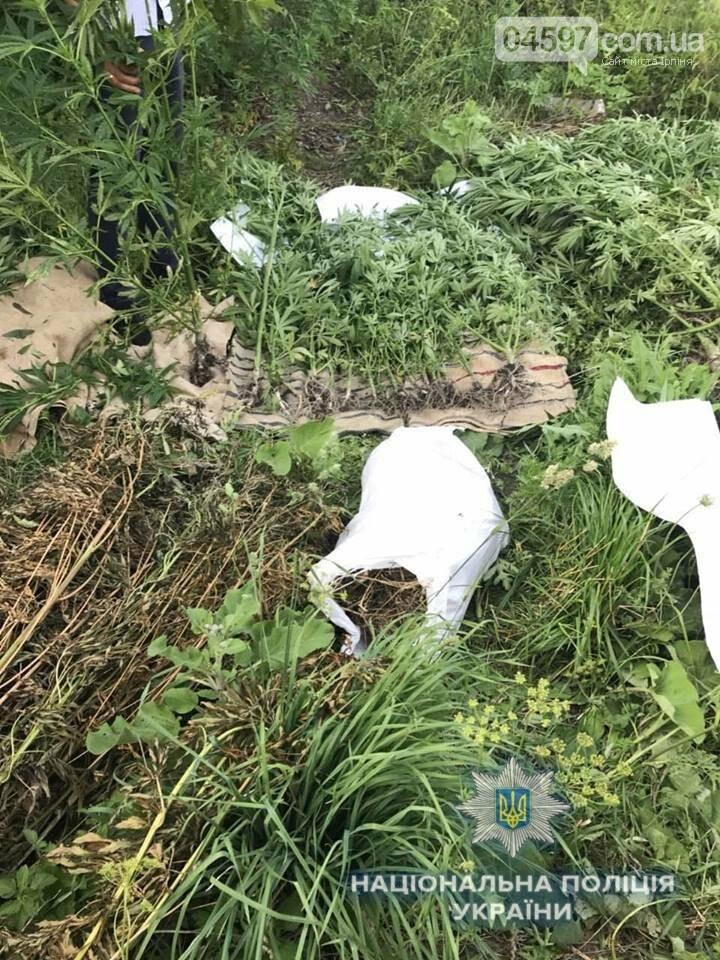 В Ірпені поліція знищила 300 кущів конопель, фото-2