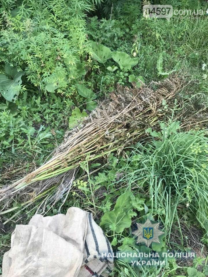 В Ірпені поліція знищила 300 кущів конопель, фото-6