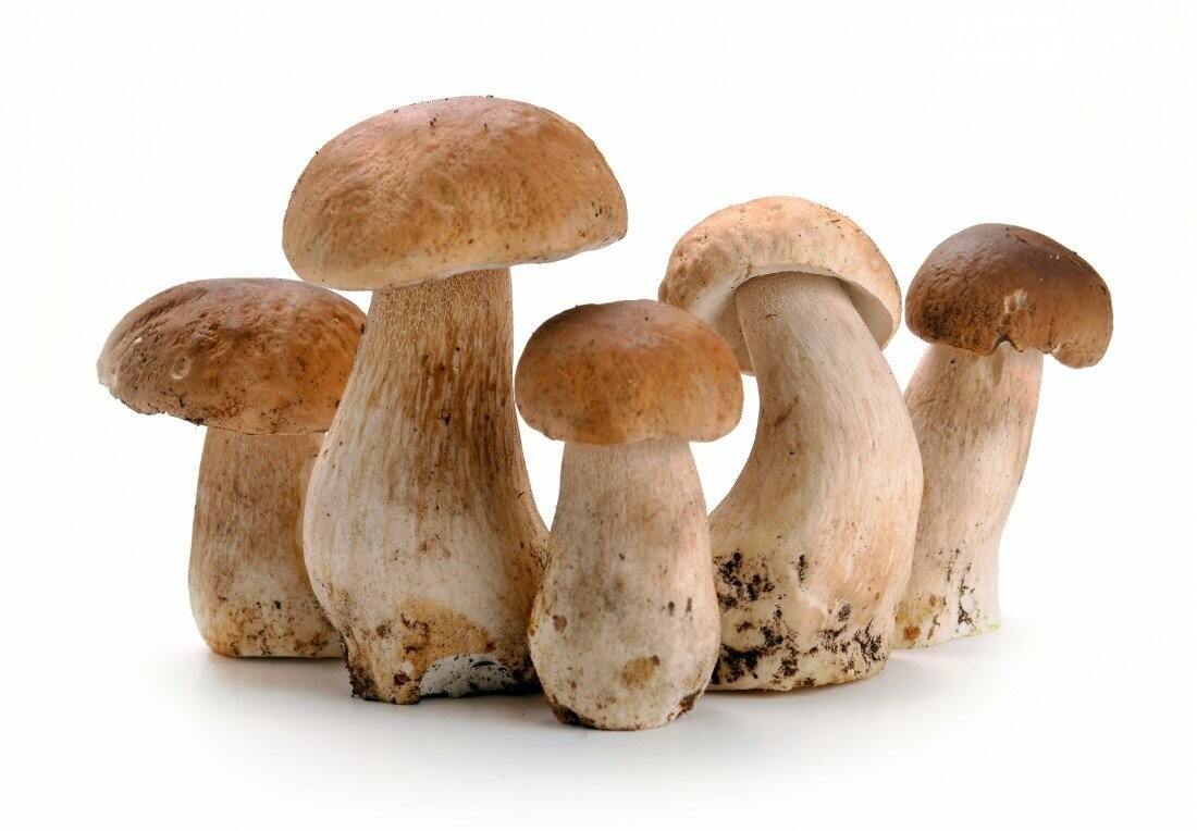 Грибний кошик: топ-8 найпоширеніших грибів, фото-1