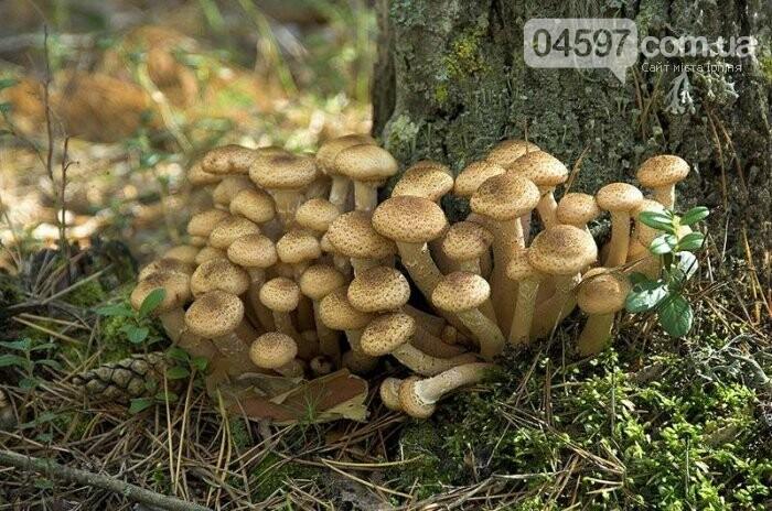 Грибний кошик: топ-8 найпоширеніших грибів, фото-6