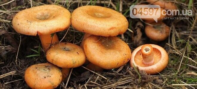 Грибний кошик: топ-8 найпоширеніших грибів, фото-7