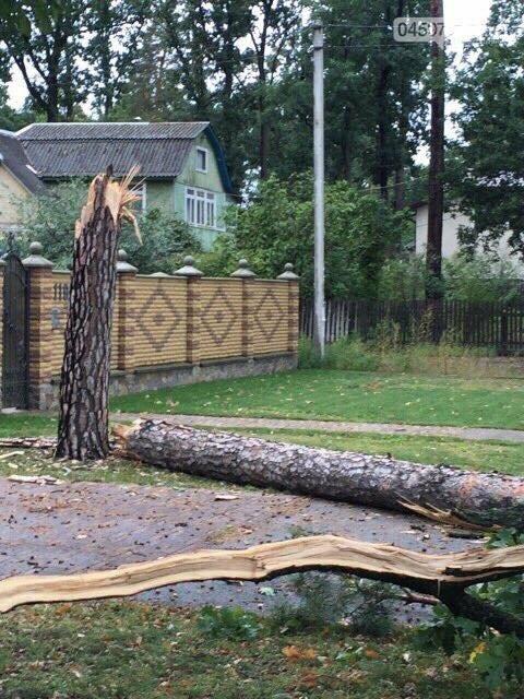 Обережно. В Бучі падають дерева, фото-1