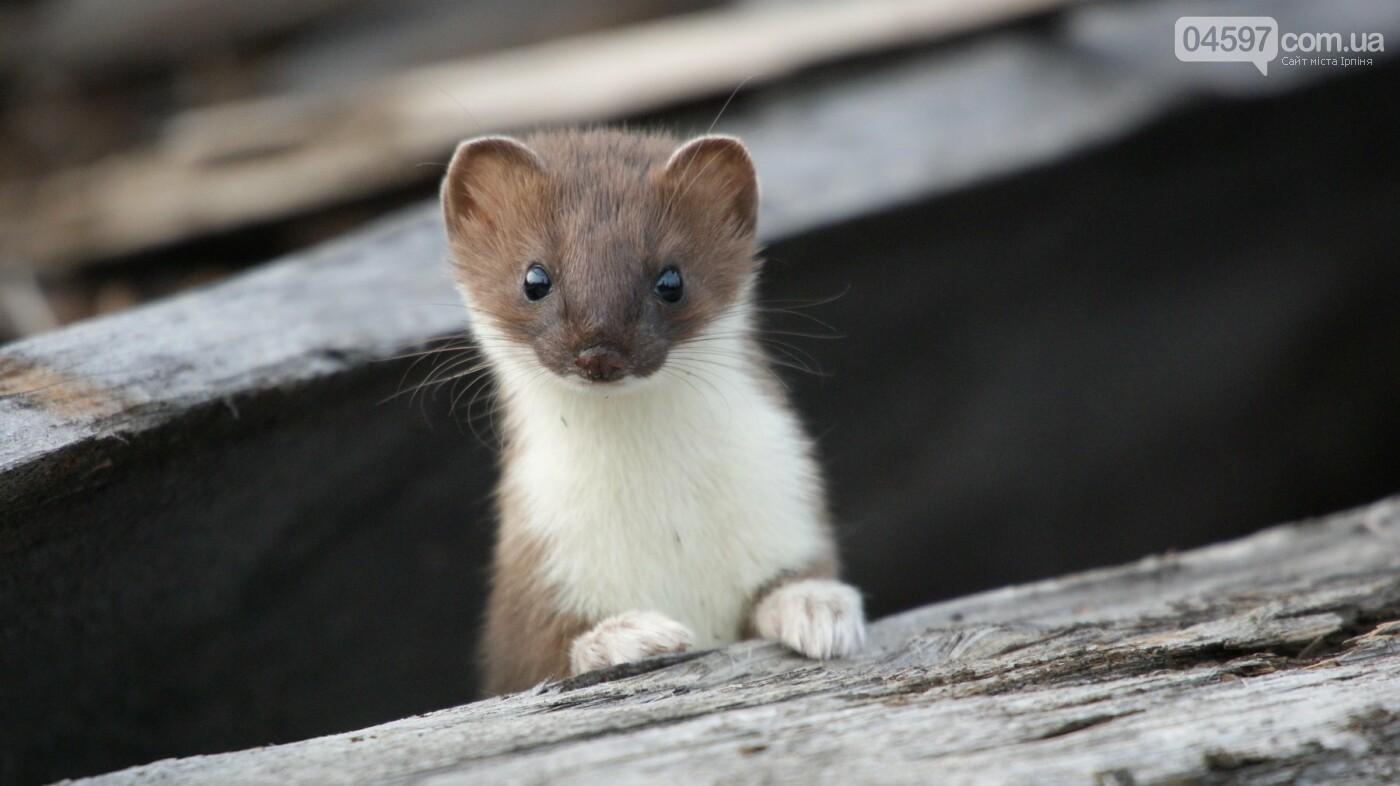15 тварин України, які знаходяться на межі вимирання, фото-9