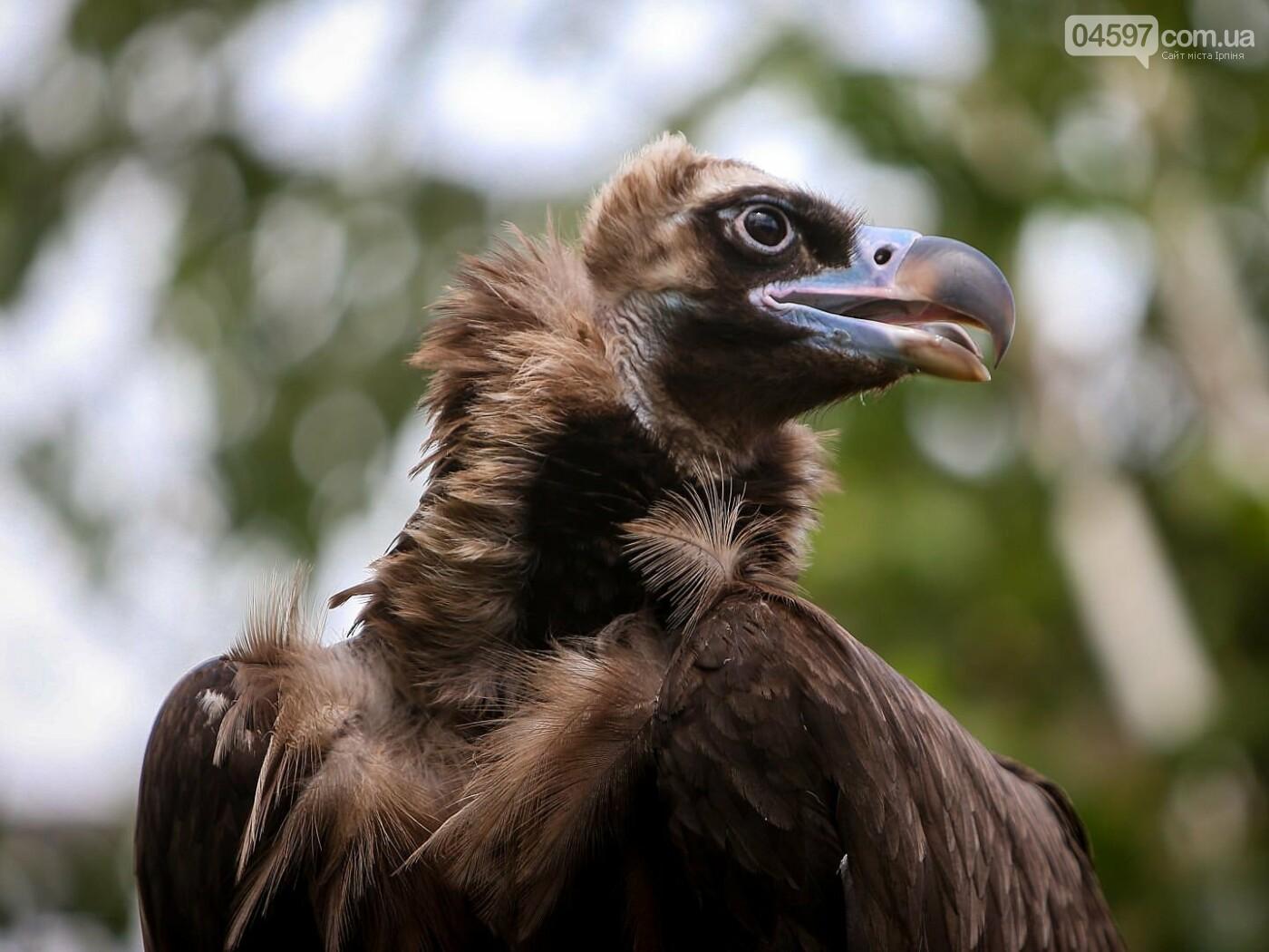 15 тварин України, які знаходяться на межі вимирання, фото-6