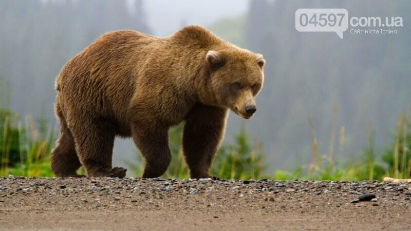 15 тварин України, які знаходяться на межі вимирання, фото-7