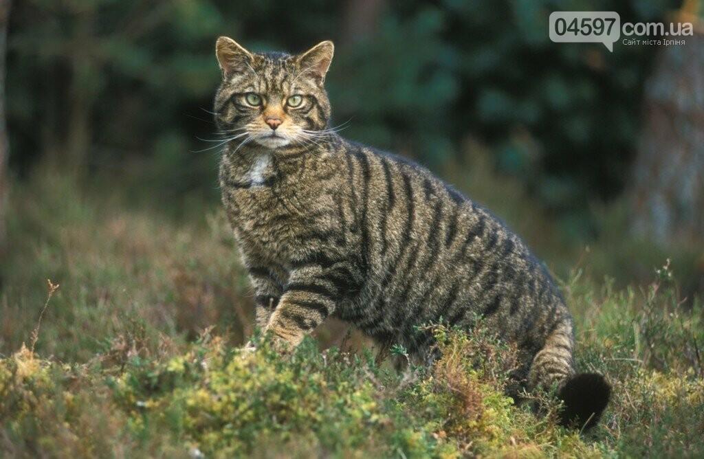 15 тварин України, які знаходяться на межі вимирання, фото-2