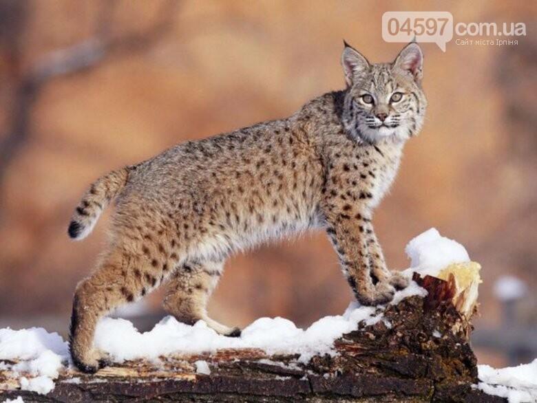 15 тварин України, які знаходяться на межі вимирання, фото-13