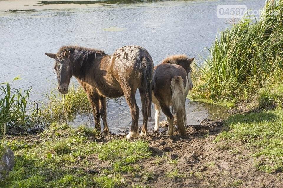 А в заплаві Ірпеня коні гуляють..., фото-3