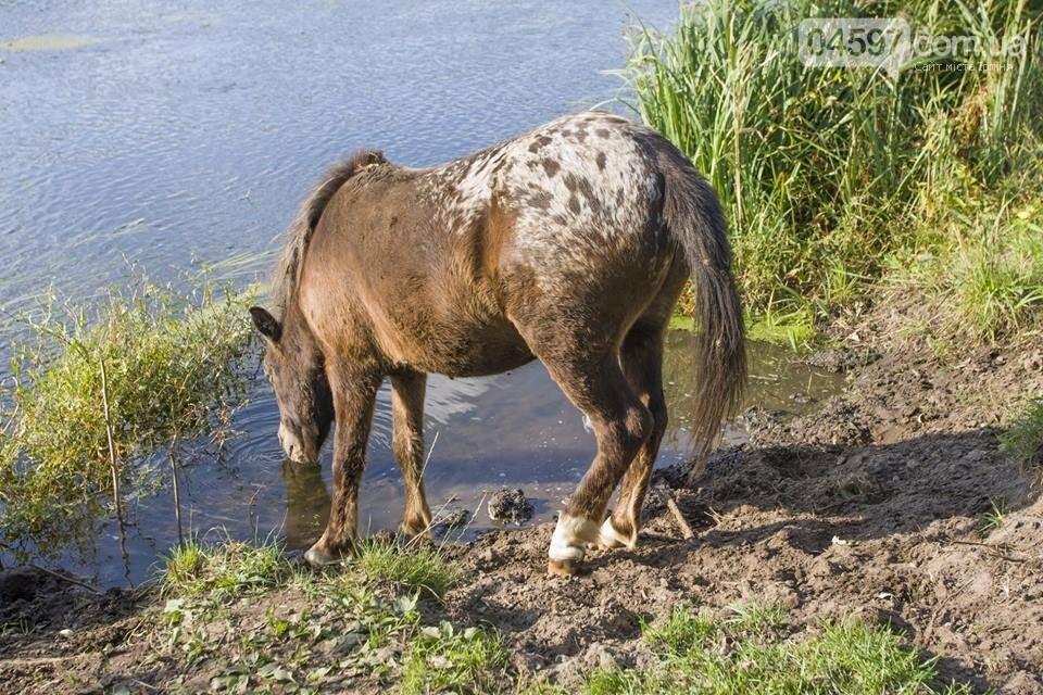 А в заплаві Ірпеня коні гуляють..., фото-16