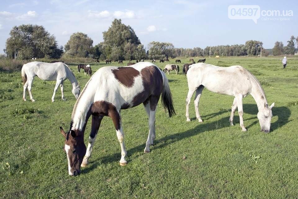 А в заплаві Ірпеня коні гуляють..., фото-4
