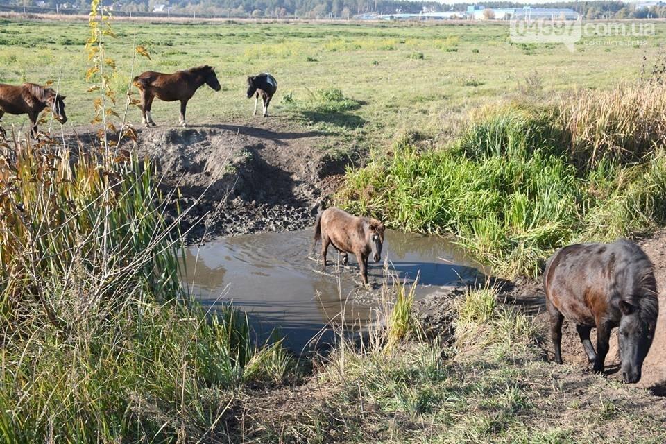 А в заплаві Ірпеня коні гуляють..., фото-5