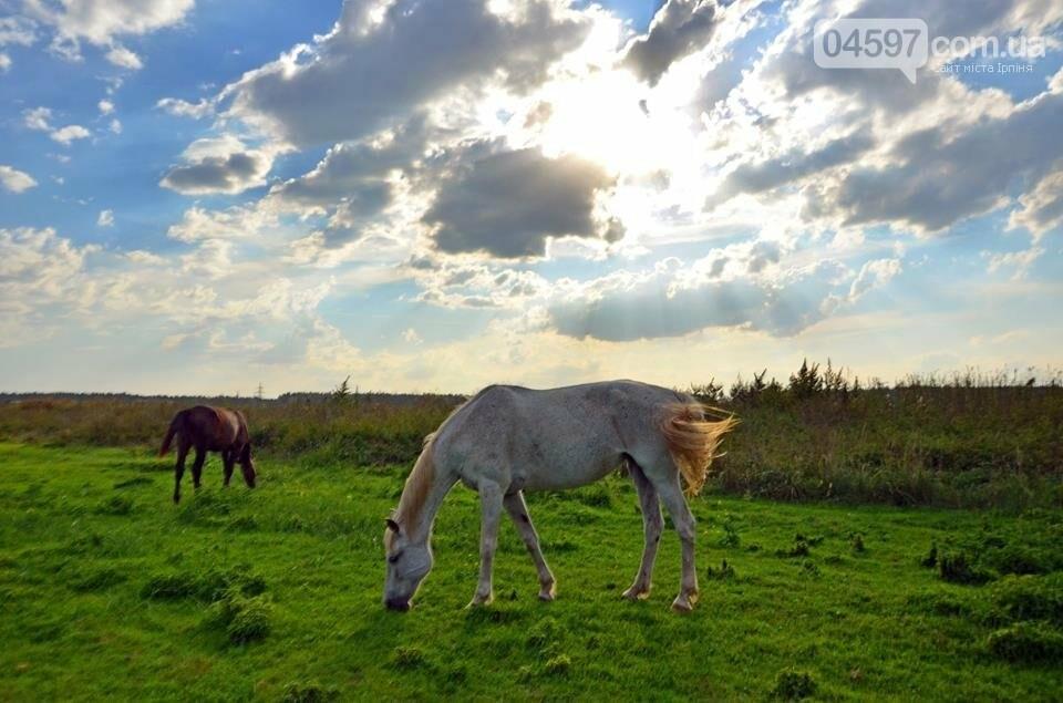 А в заплаві Ірпеня коні гуляють..., фото-1