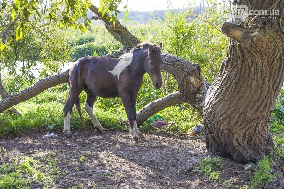 А в заплаві Ірпеня коні гуляють..., фото-13