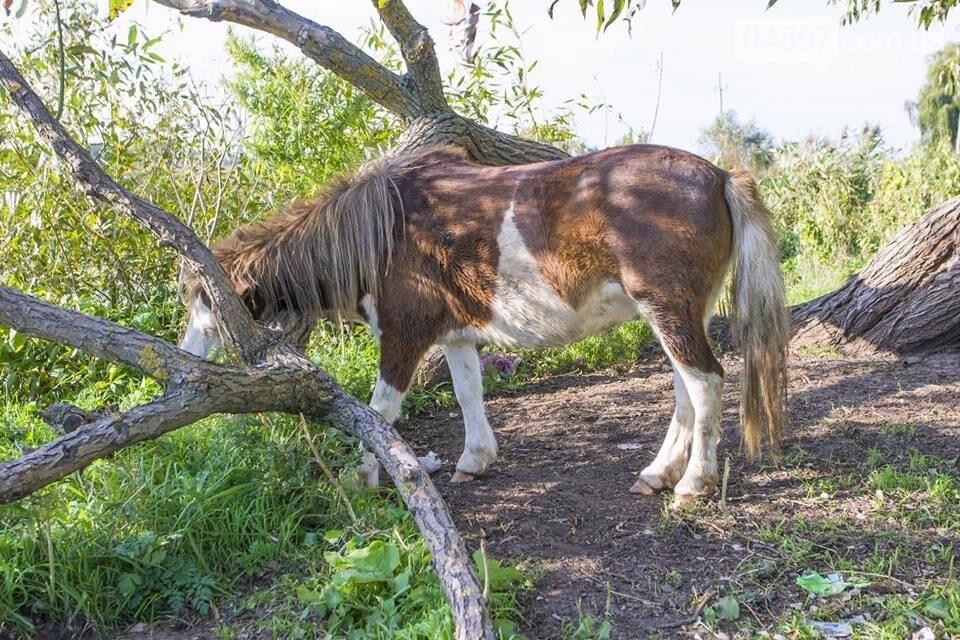 А в заплаві Ірпеня коні гуляють..., фото-14