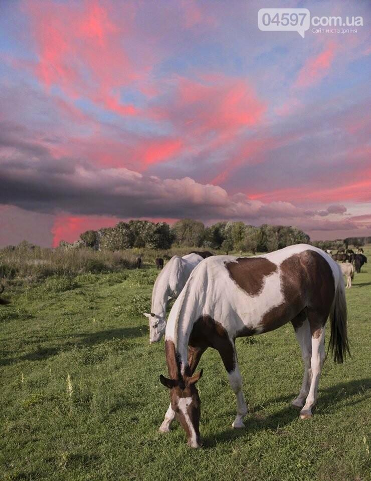 А в заплаві Ірпеня коні гуляють..., фото-2