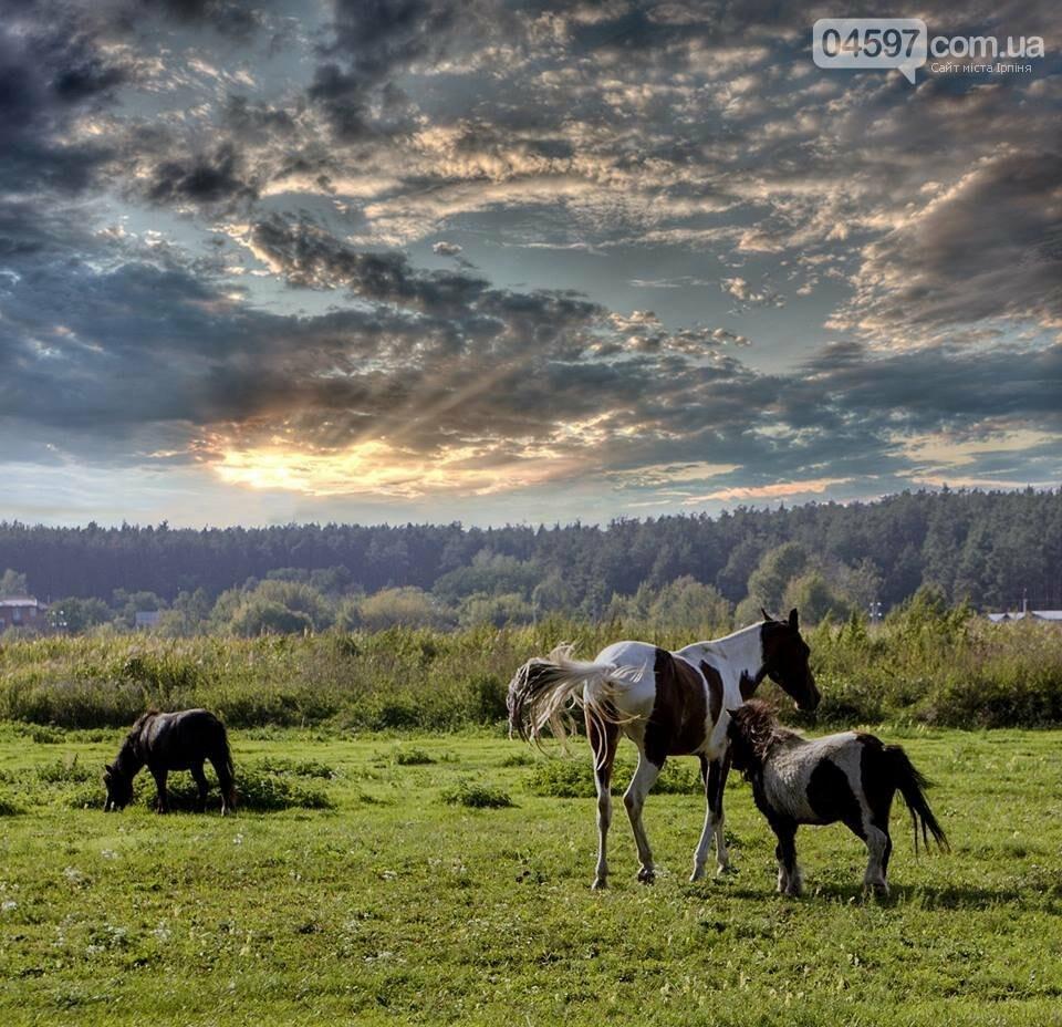 А в заплаві Ірпеня коні гуляють..., фото-7