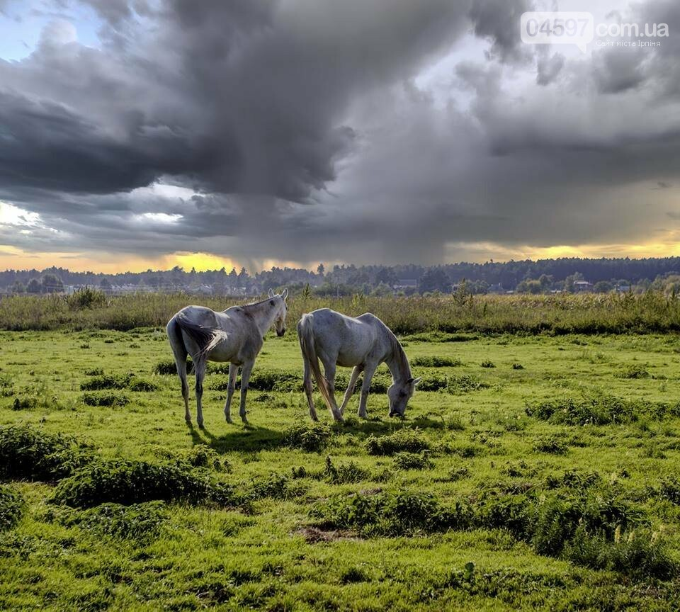 А в заплаві Ірпеня коні гуляють..., фото-8