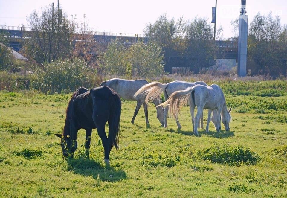 А в заплаві Ірпеня коні гуляють..., фото-10