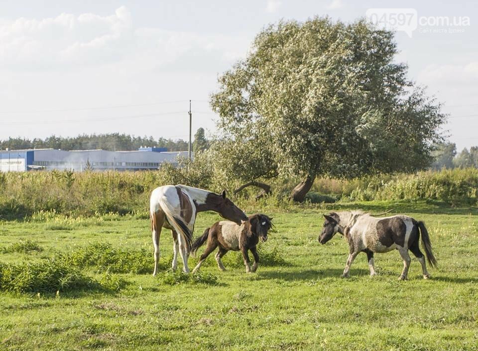 А в заплаві Ірпеня коні гуляють..., фото-12
