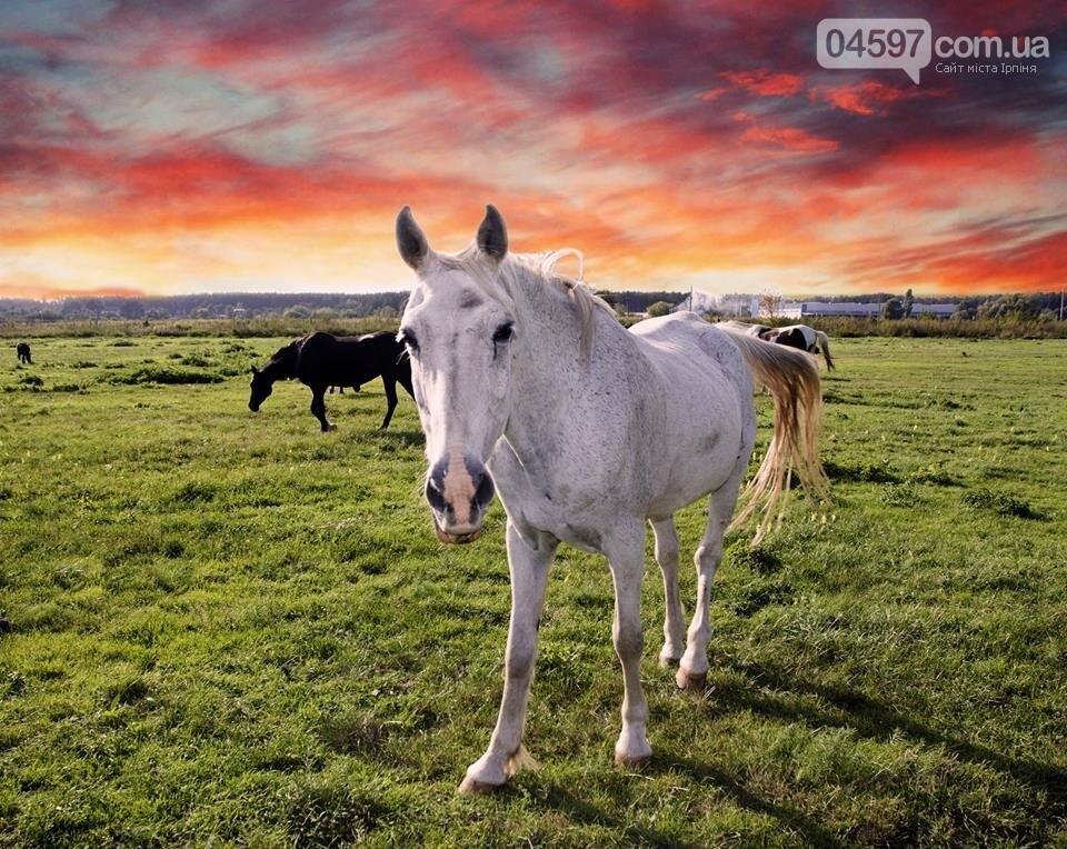 А в заплаві Ірпеня коні гуляють..., фото-6