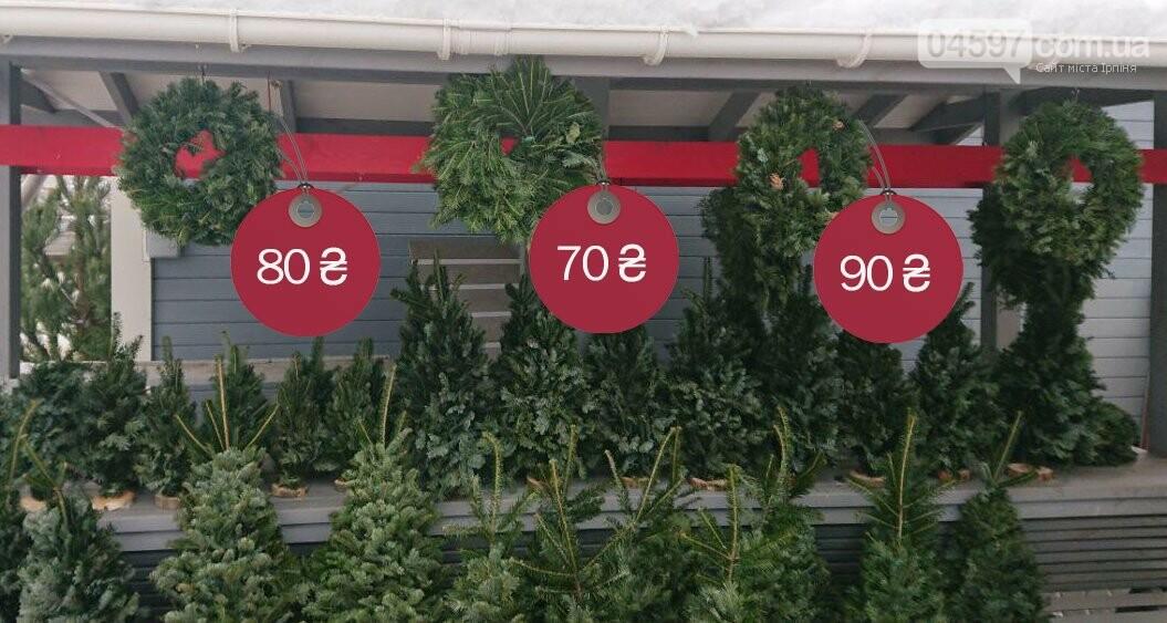 Де і за скільки купити ялинку в Ірпені, фото-4