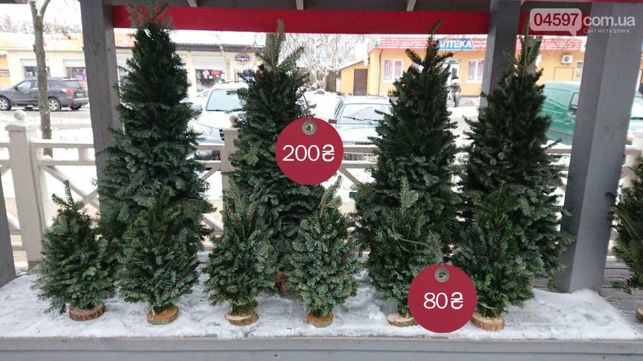 Де і за скільки купити ялинку в Ірпені, фото-3
