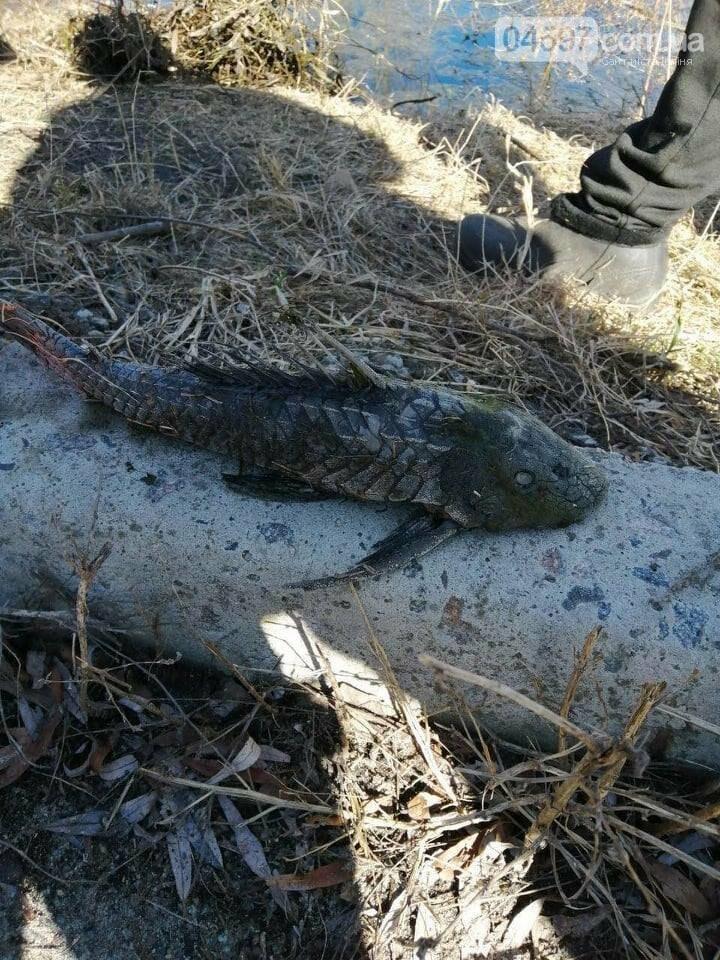 В Ірпені зловили рибу-мутанта, фото-1