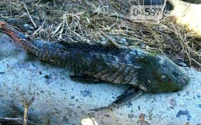 В Ірпені зловили рибу-мутанта, фото-2