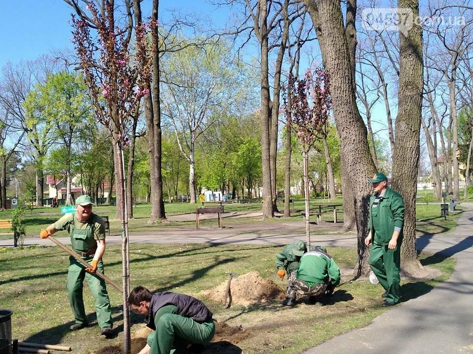 В Ірпені планують масштабні висадки дерев, фото-5