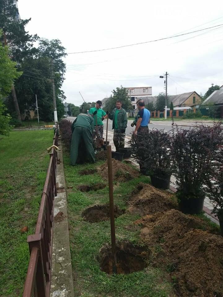В Ірпені планують масштабні висадки дерев, фото-4