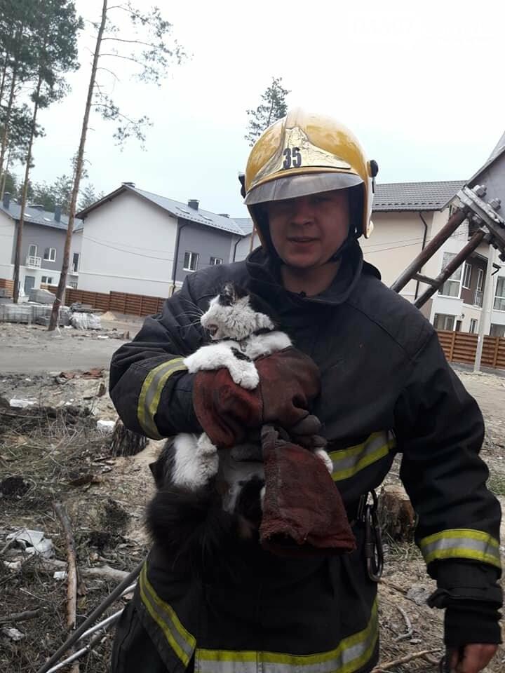 Пожежники врятували котика, який два дні просидів на сосні, фото-1