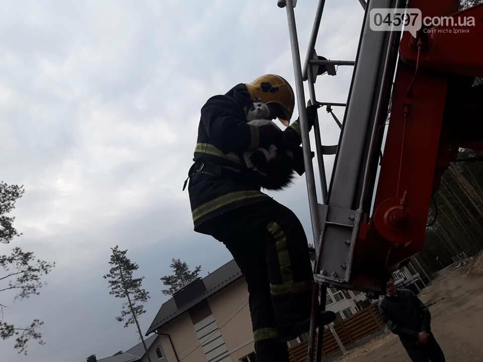 Пожежники врятували котика, який два дні просидів на сосні, фото-2