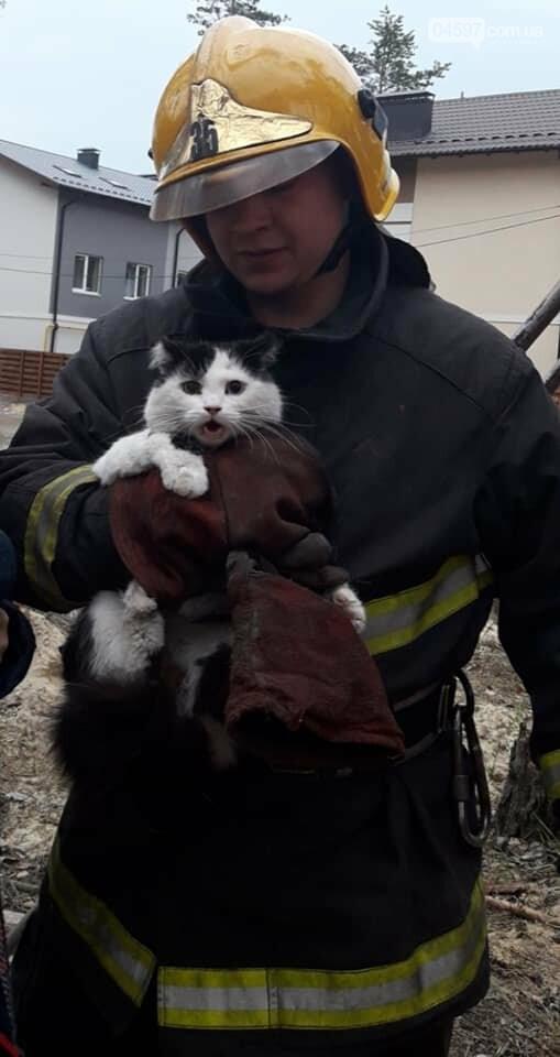 Пожежники врятували котика, який два дні просидів на сосні, фото-4