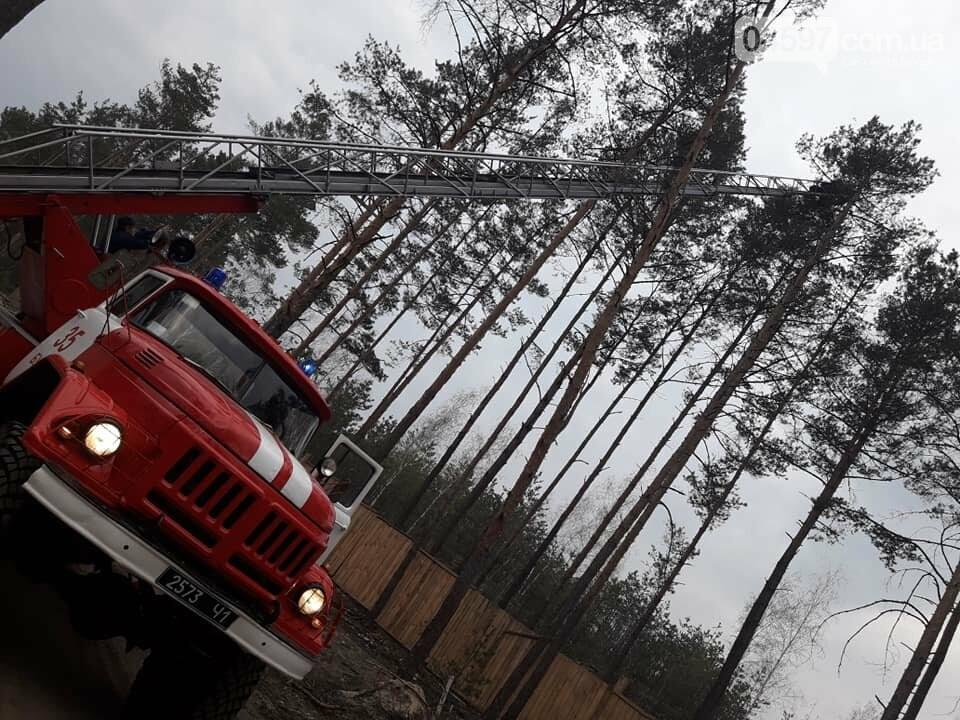 Пожежники врятували котика, який два дні просидів на сосні, фото-5