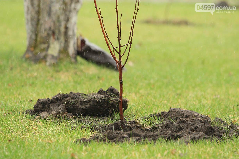 В Ірпені буде 5 тисяч нових дерев, фото-12