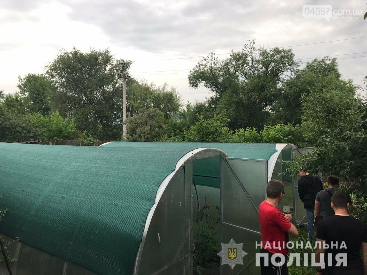 Уродженець Донецька, який тимчасово проживає в Ірпені, вирощував коноплю в парнику, фото-2