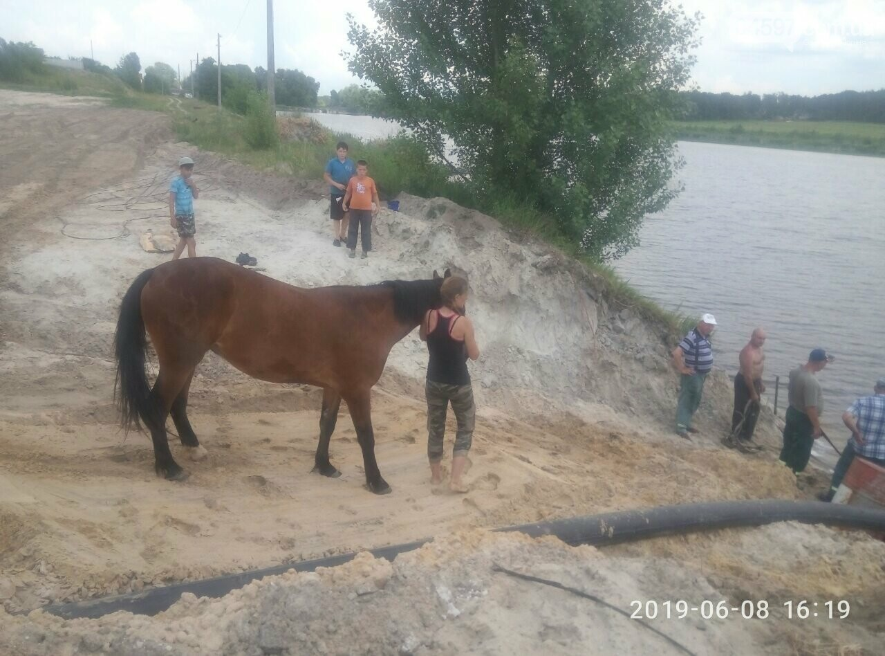 В Бучанському озері врятували коня , фото-1