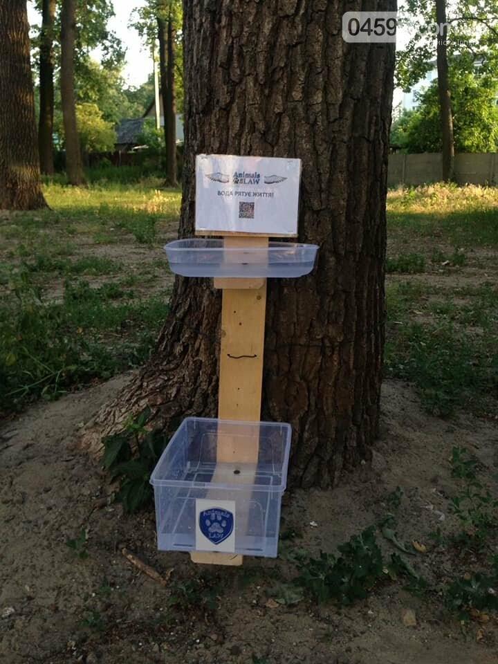 В Ірпені зоозахисники встановили ємкості з водою для безпритульних тварин, фото-1