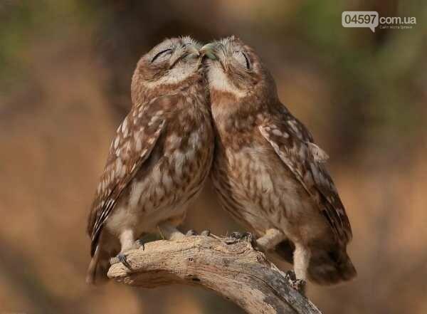 Сьогодні День поцілунків: топ цікавих фактів, фото-2