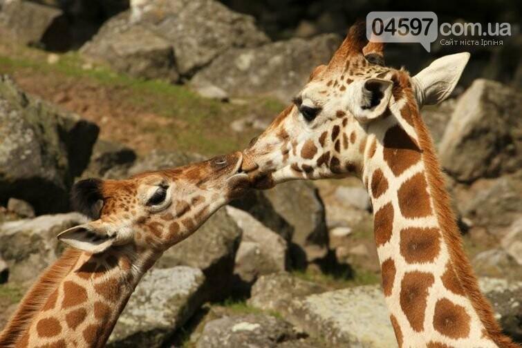 Сьогодні День поцілунків: топ цікавих фактів, фото-4
