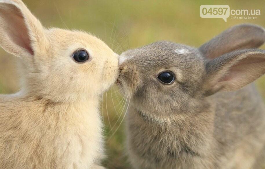 Сьогодні День поцілунків: топ цікавих фактів, фото-6