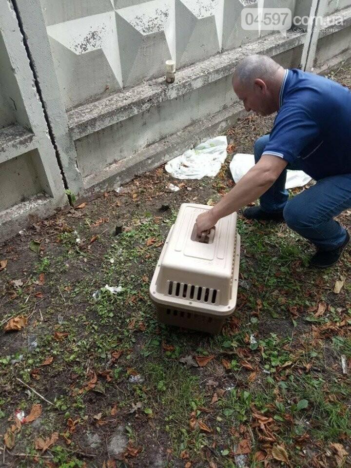 В Ірпені біля дороги лишили кошик із цуценятами, фото-1