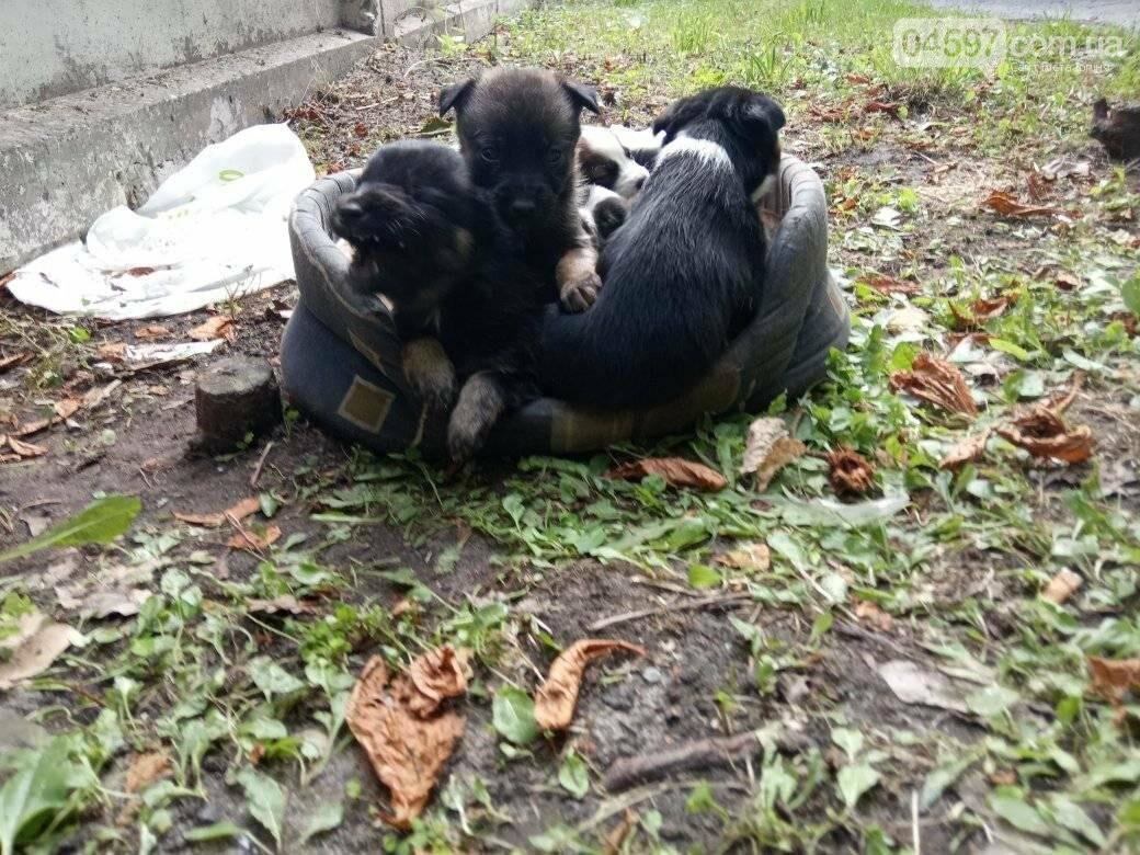 В Ірпені біля дороги лишили кошик із цуценятами, фото-3